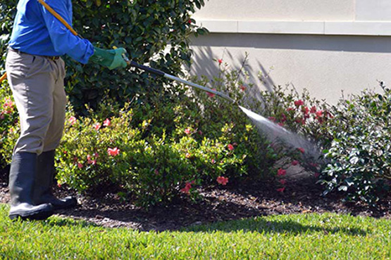 Professional Lawn Care By DSC Solutions